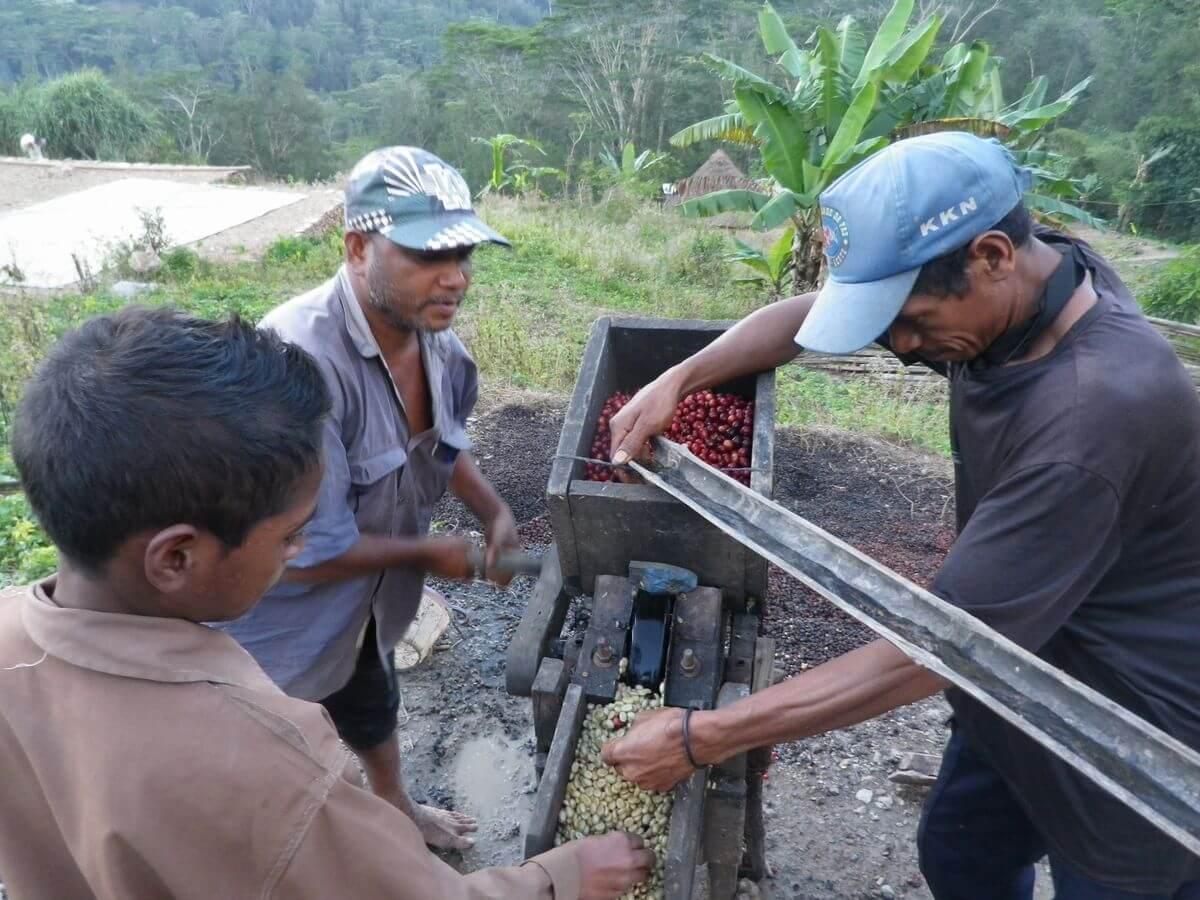 Koffieboeren Oost Timor