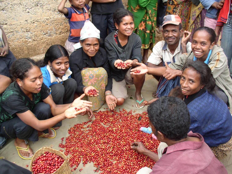 Lagaranta koffieplantage Oost Timor
