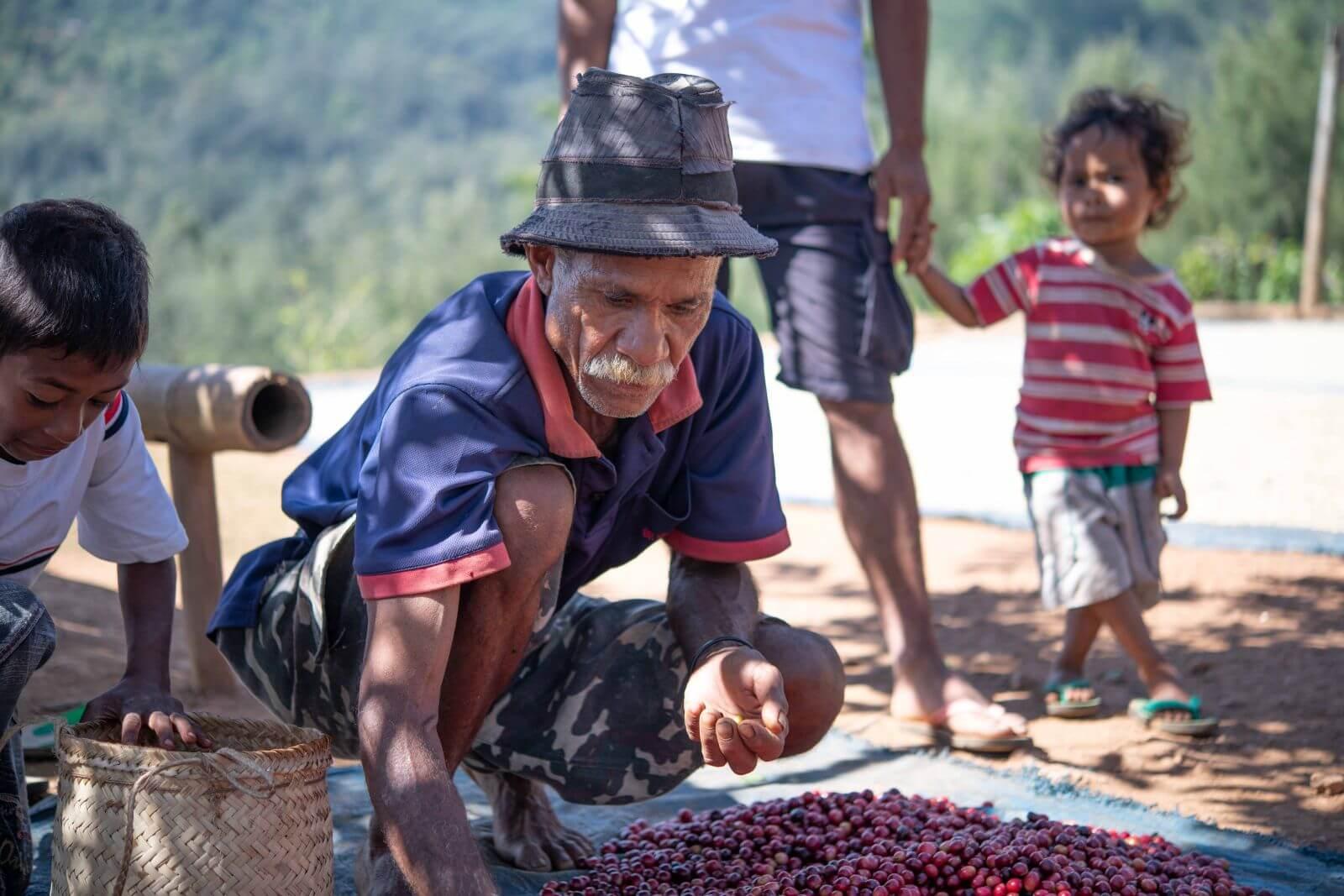 Lagaranta koffieplantage Oost Timor Goulala